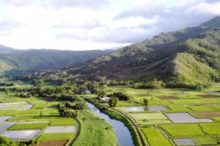 Hanalei Valley Slack Key